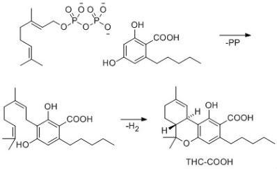"""Science Minus Details: """"Weed Science"""" or """"Activation Explained!!"""""""