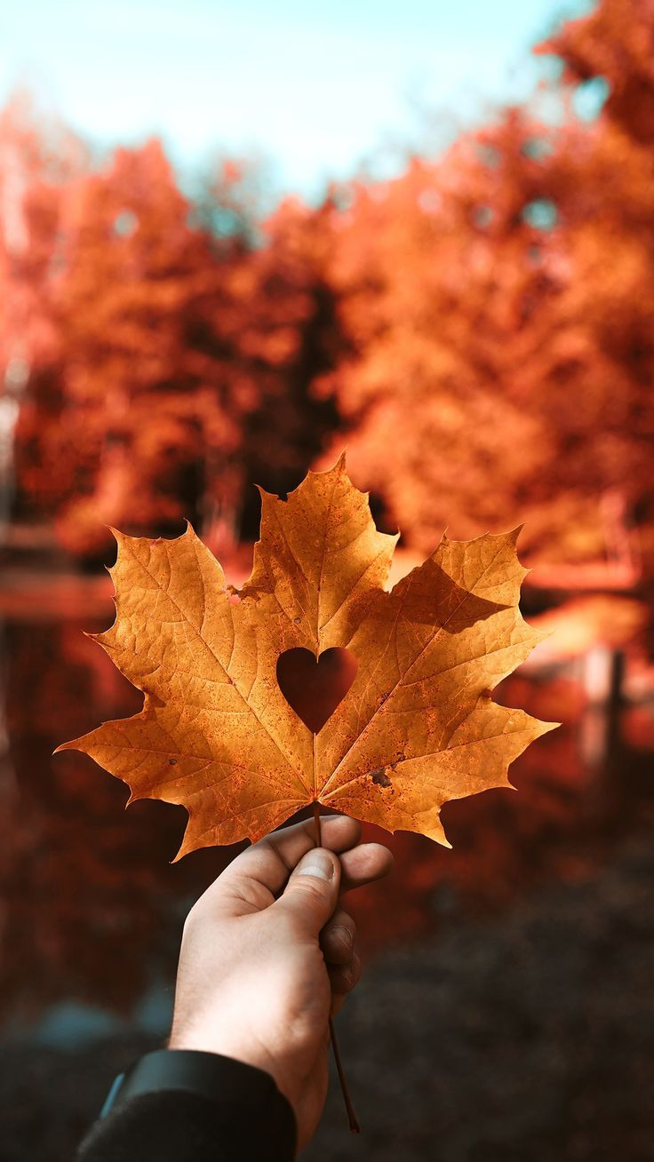 Nature Autumn Leaf Love Heart 4k Wallpapers 4k Autumn Heart Leaf Love Nature Wallpapers Autumn Photography Fall Wallpaper Iphone Wallpaper Fall