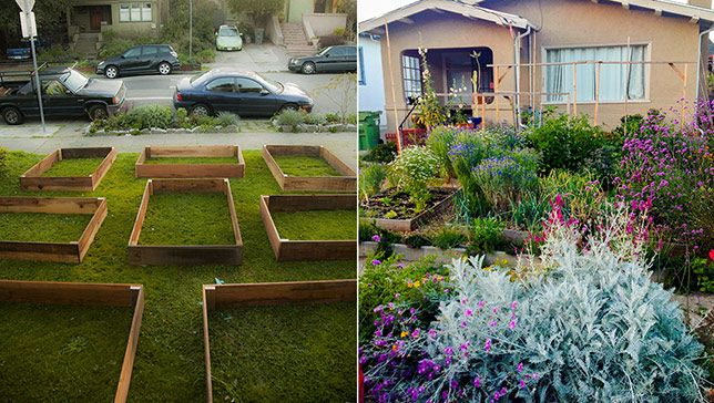 Homeowner's lawn-to-garden transformation yields more than just vegetables  Read more: http://www.mnn.com/your-home/organic-farming-gardening/blogs/homeowners-lawn-to-garden-transformation-yields-more-than#ixzz3HuvUkoJ9