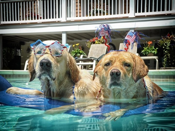 Congrats James Betts on being selected as our fan photo of the weekend! We selected your photo to represent our cover photo! Thank you for your photo on Independence Day of your doggies celebrating in Estell Manor, New Jersey! Very festive!: Channel Facebook, Facebook Photos, Weather Channel, Dogs Day, Fans James, Facebook Fans, Pools Pals, Independence Day, Animal