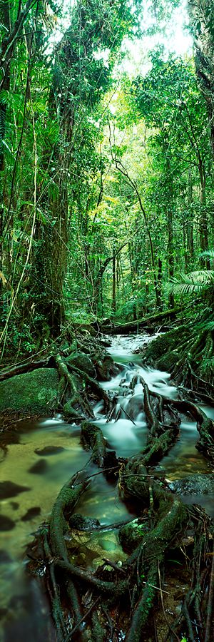 Rainforest - Australia