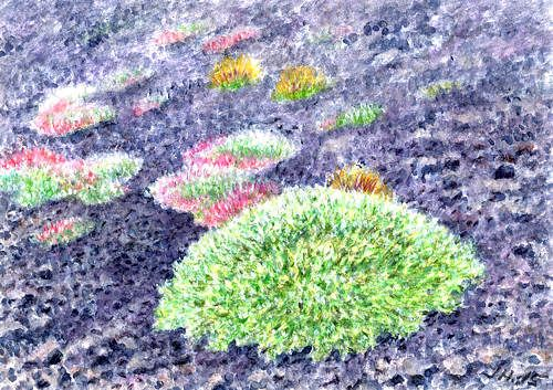 Astragalus and Saponaria sicula in Etna, watercolor ands pastel by Jana Haasová