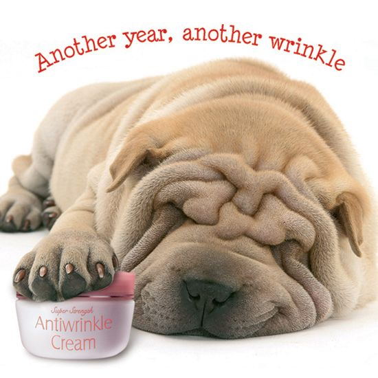 """Shar Pei """"Another Wrinkle"""" Birthday Card 