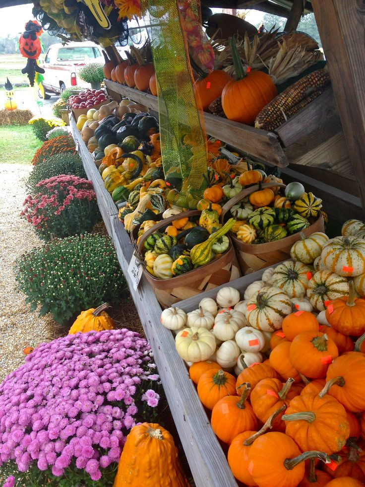 My absolute favorite fall activity.....visiting a farm.