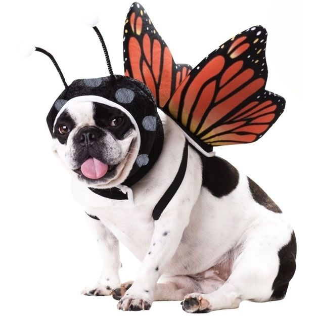 Halloween Costumes – 20 Dogs Already Prepared