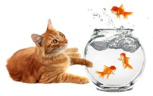 Even though cats really love fish, it's not advisable to feed your cat with fish.