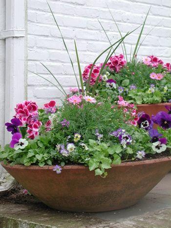 terra cotta bowl arrangement...