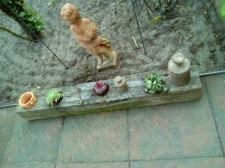Alter Zaunpfahl bepflanzt..