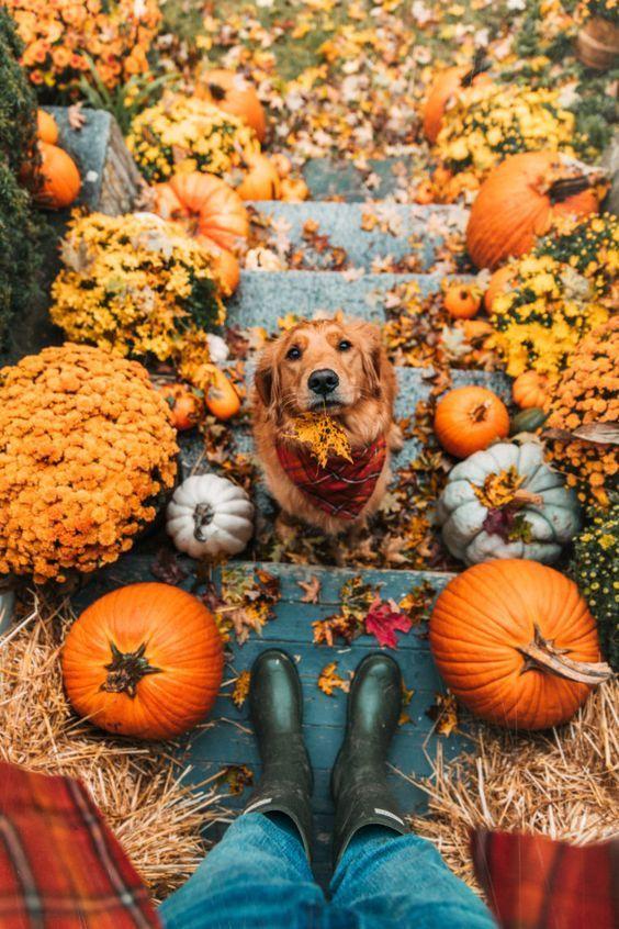 Blog : L'automne