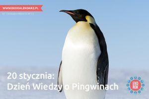 pingwin7