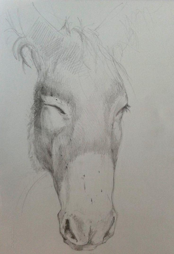 Drawing Pencil Sketch Asinello