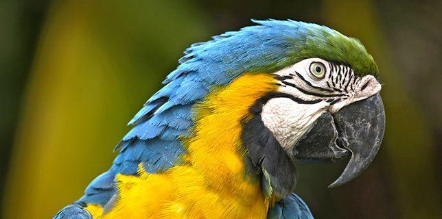 Coopérative de solidarité d'entraide pour la survie des perroquets - CO-ESP  #parrot #petbirds #companionparrot #birdclub