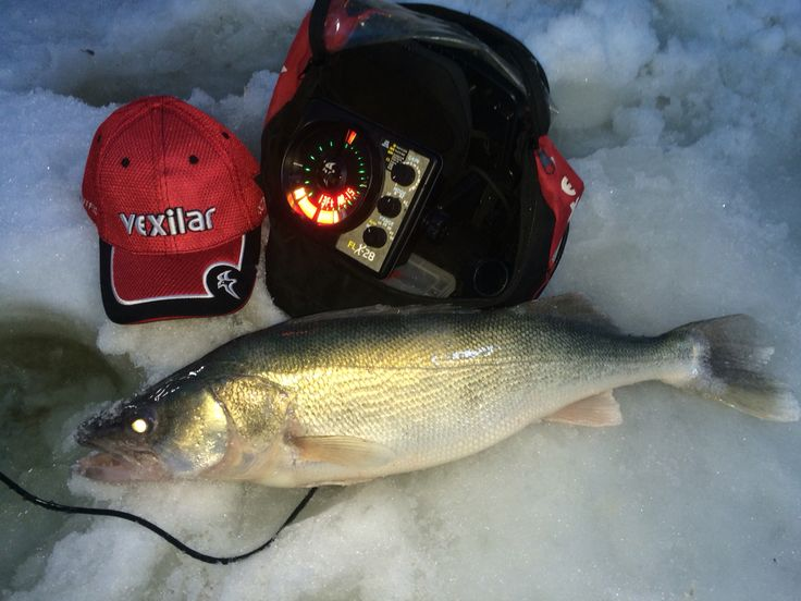 A good Lake Winnipeg walleye made possible by Vexilar FLX-28