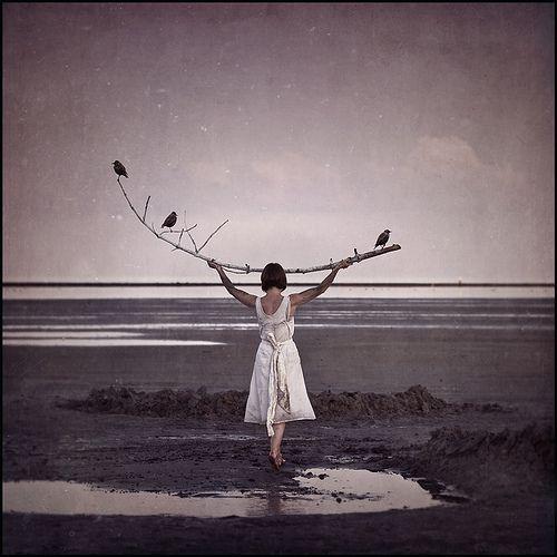 the sea of dreams  by bianca van der werf