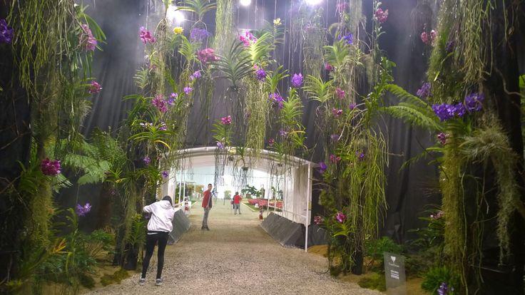 FloraFirenze. Maggio 2015