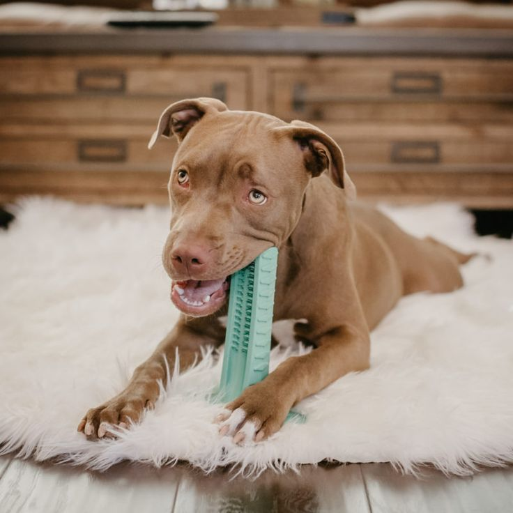 Best Dog Chews For Cleaning Teeth
