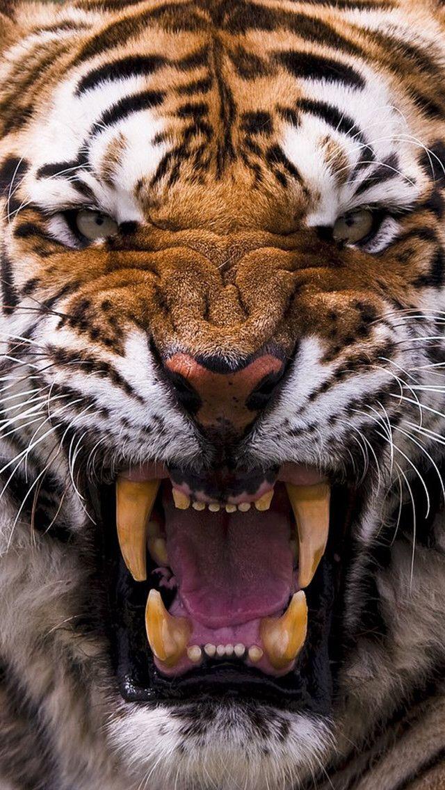 Go Clemson Tigers!!!!