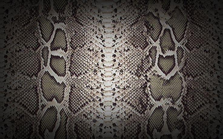 snake-s2013-LHA-fashion-analyst