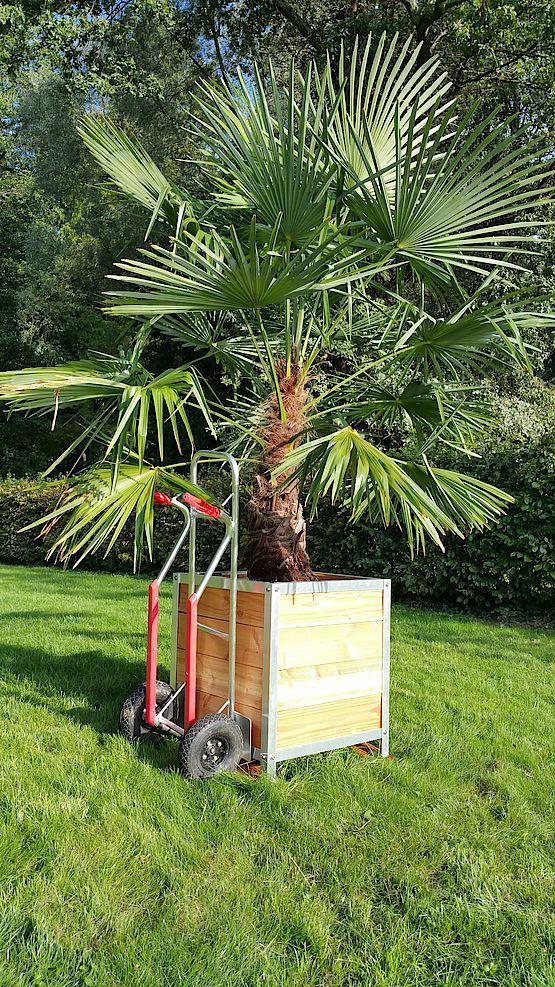 Bilder unserer Kunden: Blumenkübel - Pflanzkübel - Holzkübel online kaufen