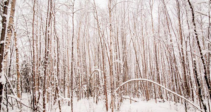 Tjaktjadálvve - Autumn-winter