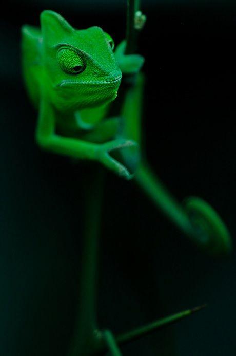 Chameleon by Andi Mezger