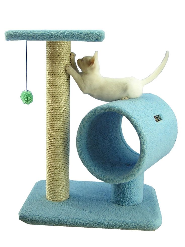 Armarkat Cat Tree Model B2501, Sky Blue >>> For more information, visit now(This is an affiliate link and I receive a commission for the sales) : Cat Condo Tree Tower