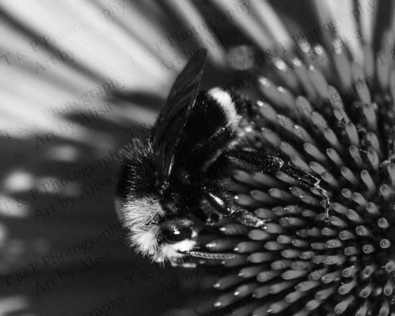 DIGITAL DOWNLOAD photo B&W Black and White bee by Turtlesandpeace