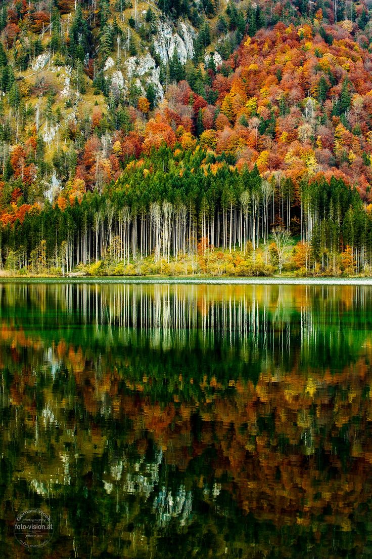 Autumn Forest Taiwan: 172 Best Images About WATER REFLECTIONS On Pinterest