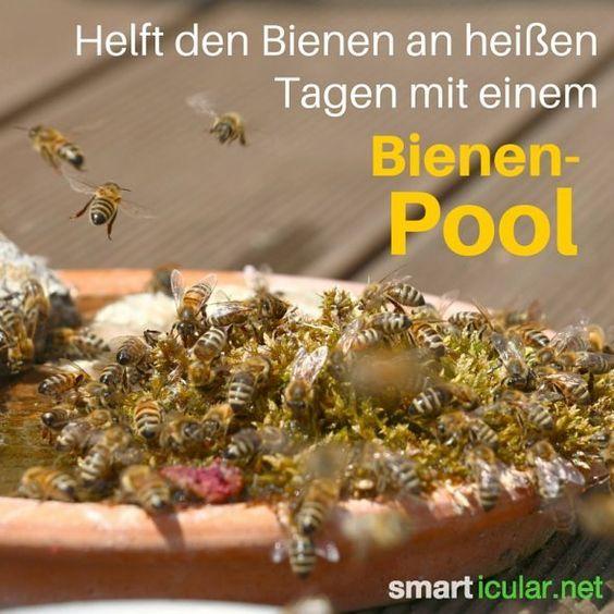 13 Wege, wie jeder den Bienen helfen kann – Petitionen sind nicht genug