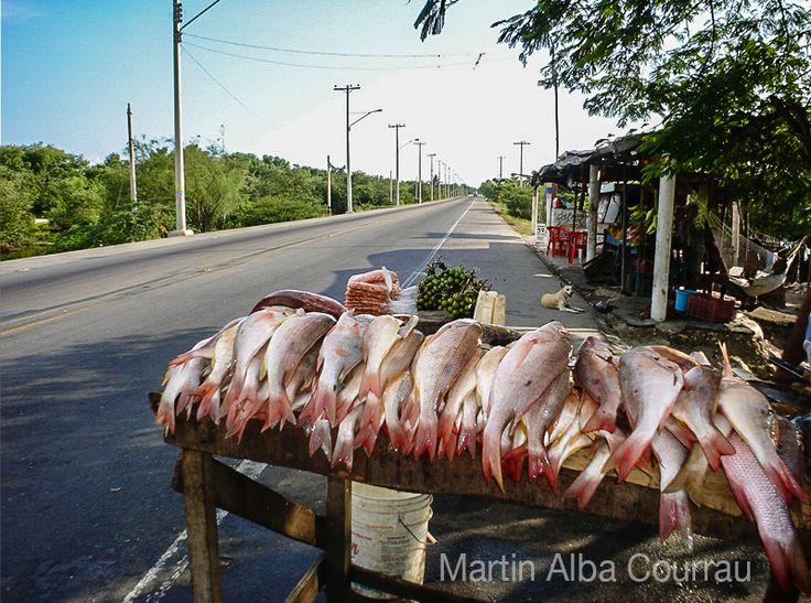 Venta de Pargo Rojo en la vía a Mompox - Colombia. Fotografía: Martin Alba Courrau