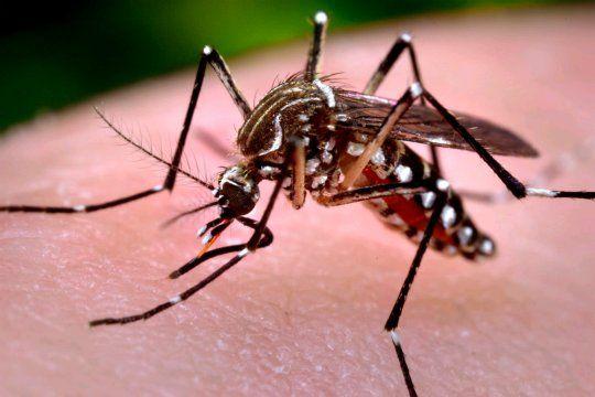 Zika virus, a tropical disease that knows no borders