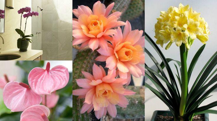 Molto spesso si utilizzano le piante per decorare le stanze dell'abitazione, oltre che il giardino o qualsiasi altro spazio esterno; aggiungere alcune specie verdi o fiorite tra le mura domes…