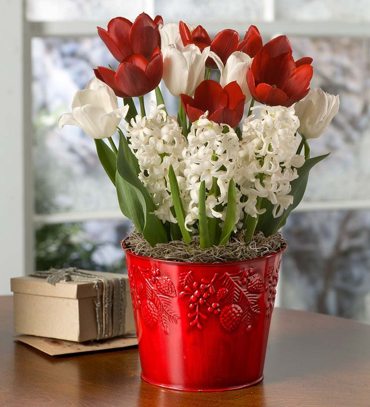 Flower Bulb Gift Baskets : Best images about flower gardens gifts on