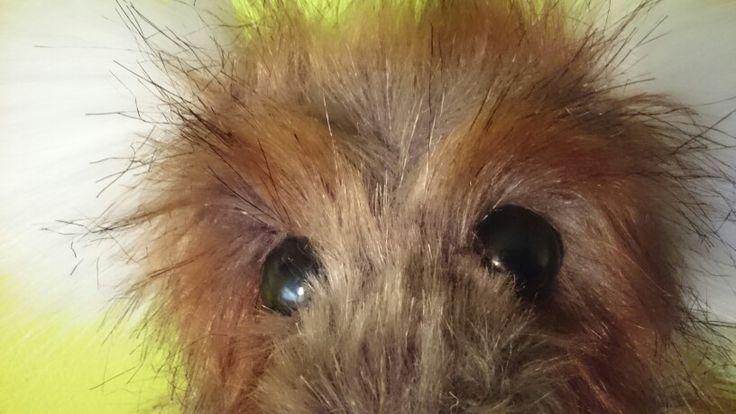 Bears need eyebrows too