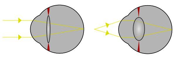 Evolution of the eye - Wikipedia, the free encyclopedia