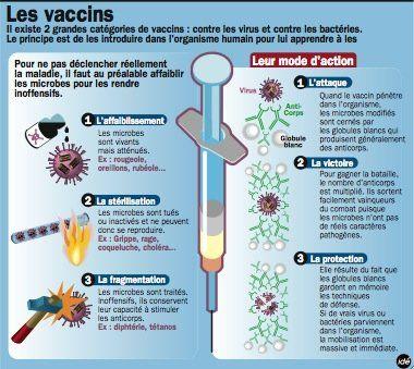 vaccination schéma - Recherche Google