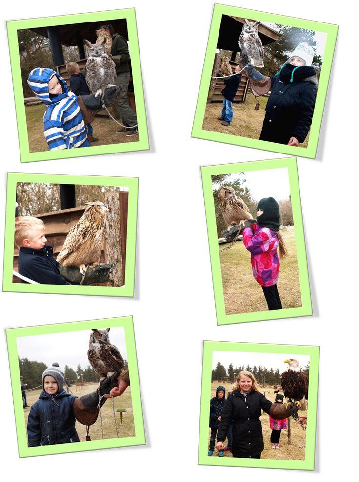 Blokhus Vildtreservat er stedet med spændende oplevelser for hele familien. Blokhus Vildtreservat omfatter 65 hektarer og ligger i et fantastisk naturområde sydøst for Blokhus Klitplantage på vejen mellem Hune og Rødhus.  Kom og se alle vores spændende dyr, se de prægtige amerikanske bisonokser, de stolte krondyr og ikke mindst de stivbørstede og frække vildsvin. Slut dagen med vores flotte rovfugle opvisning.