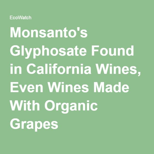 First it was discovered in German beers...  Now California wines...  Are we all in denial?... We have allowed the corrupt to run rampant on society. http://ecowatch.com/2016/03/27/monsanto-glyphosate-wine/