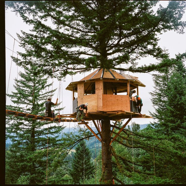 302 Best Images About Treehouse Ideas On Pinterest Trees