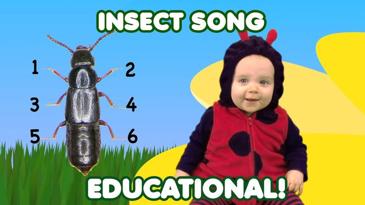 Do you know the parts of an insect? Learn about insects for kids. Lyrics Hop, hop, creep, creep, crawl, crawl, fly, fly, fly, fly, fly An insect has two ante...