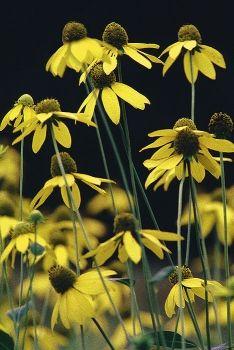 Flower Garden Ideas In Michigan 16 best native michigan plant palette images on pinterest | flower
