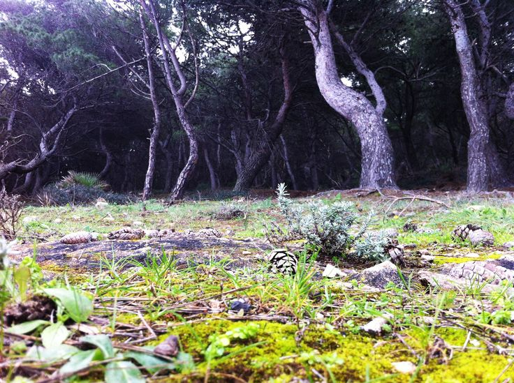 Mysterious wood on the island