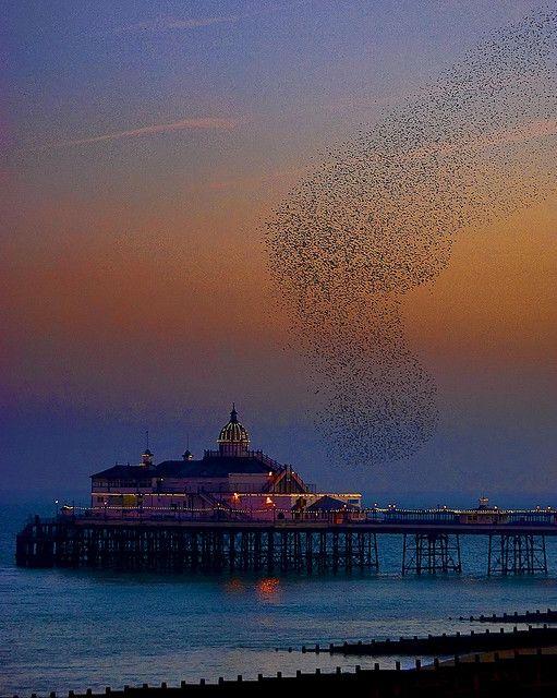 ♥ Eastbourne Pier