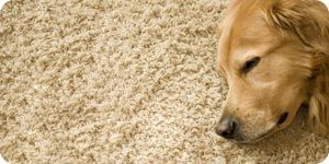 pet urine out with baking soda