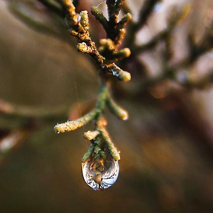 Tear drops of Gaia. For how long will the rivers flow? For how long will those trees stay green? #share #water #gaia #ťhoughtoftheday #teardrops #nature #abstract #foodforthought #earth #wallart