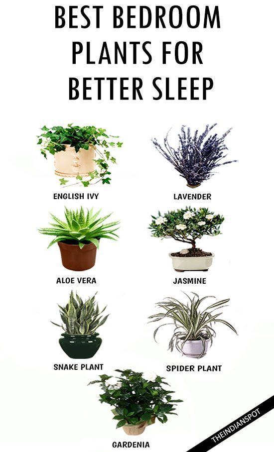 Do you want a Better Sleep? Add These Houseplants to Your Bedroom.
