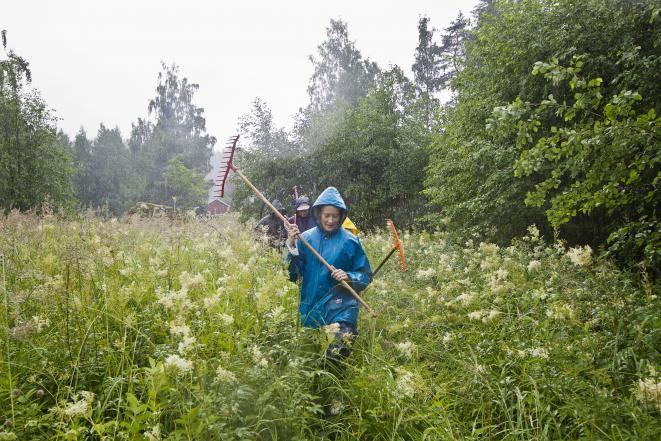 100 % vapaalla arkeen kuuluvat myös talkoot, Saimi Hoyer niittohommissa
