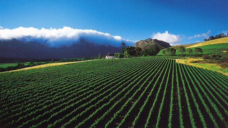 Mont Rochelle Hotel & Mountain Vineyards Franschoek