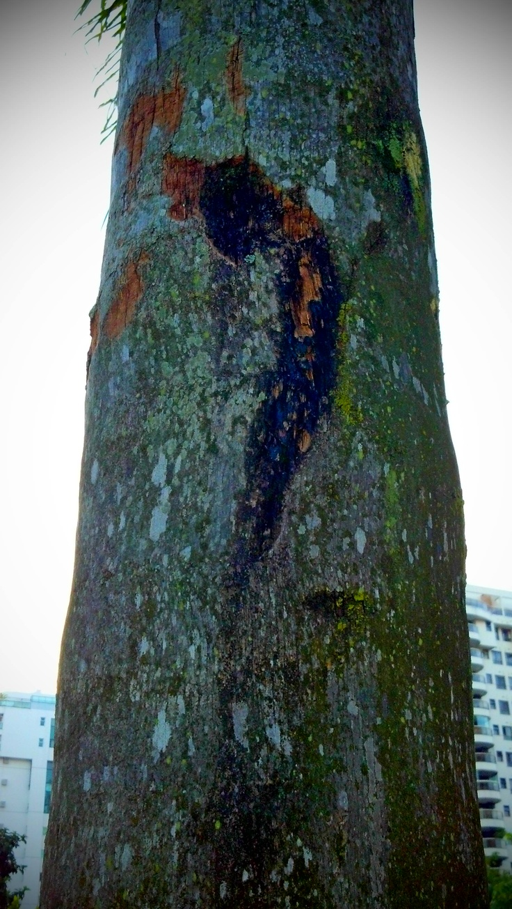 Bright morning, sound of the trumpet: Natural Miles... by Antonio Carlos Teixeira 2013 #natureza #natureza_brasileira #nature #brazilian_nature #art_digital #digital_art #art #arte_digital #arte #arte_alternativa #alternative_art #brazilian_art #fotografia_digital_brasileira #brazilian_art_photo elfwood@nym.hush.com