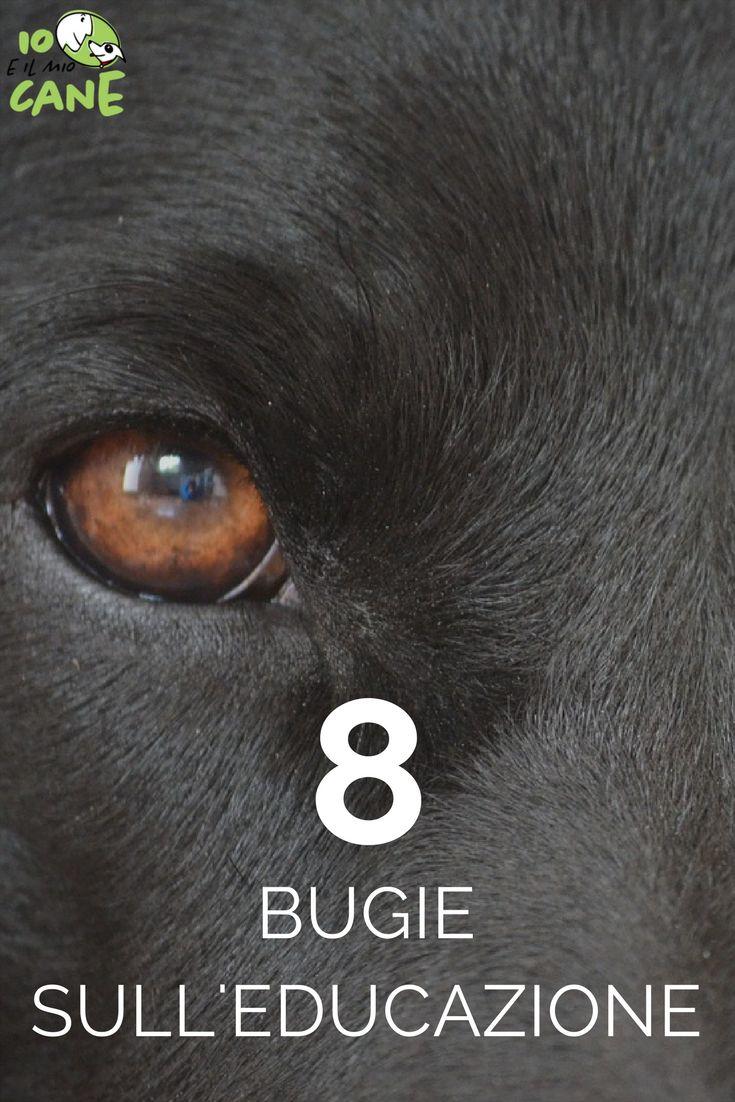 Quali sono le bugie sull'educazione del cane?